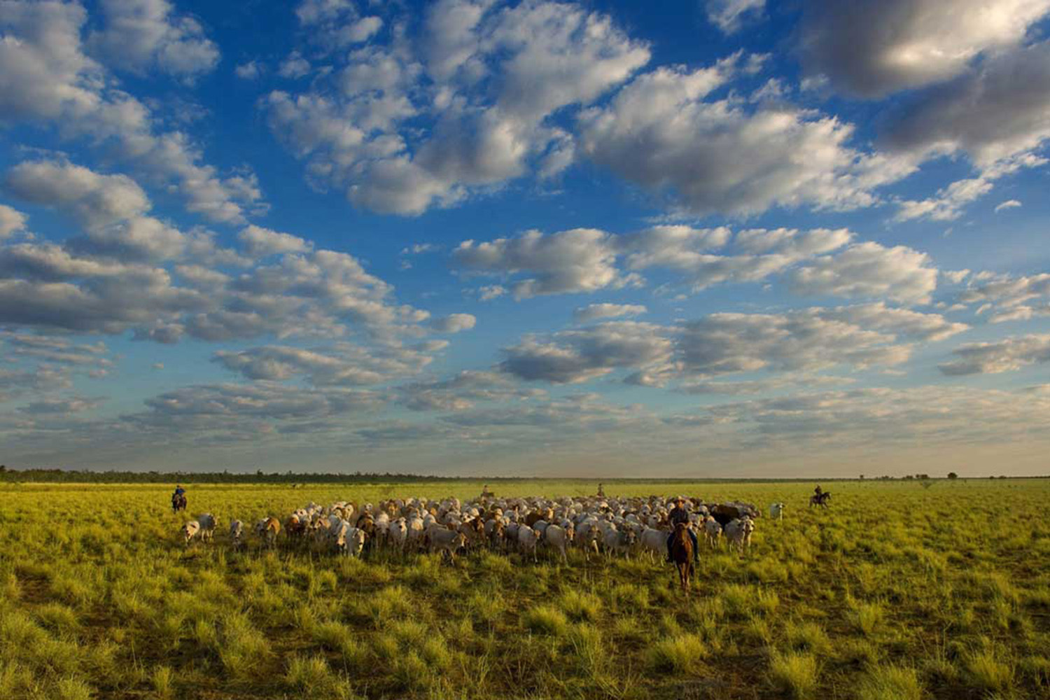image of AARONTAIT COPYRIGHTED 2014 366 RURAL PHOTOGRAPHER FARM LIFE AGRICULTURE WOOL BEEF STOCKMAN MUSTER CATTLE FARM AUSTRALIAN MUSTER EPIC BIG SKY MOB GULF COUNTRY