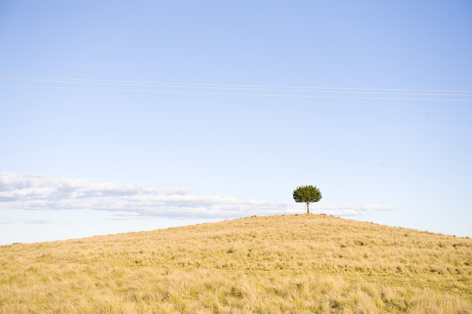 image of AARONTAIT COPYRIGHTED 2014 378 RURAL PHOTOGRAPHER FARM LIFE AGRICULTURE WOOL BEEF STOCKMAN MUSTER CATTLE FARM AUSTRALIAN LONE TREE HILL ALONE SOLITUDE LANDSCAPE
